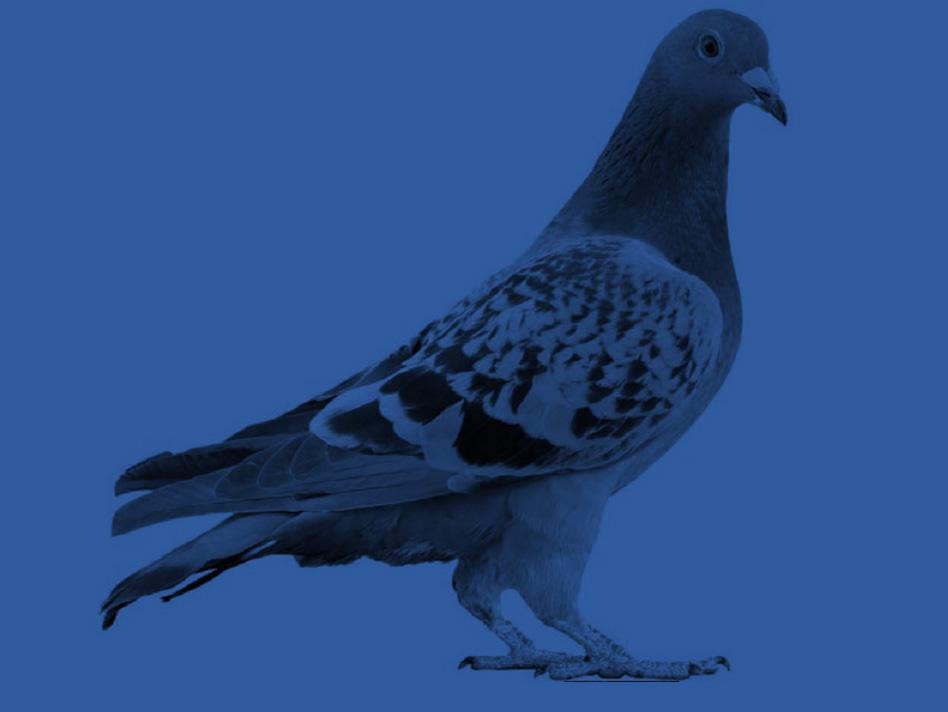 antipigeon
